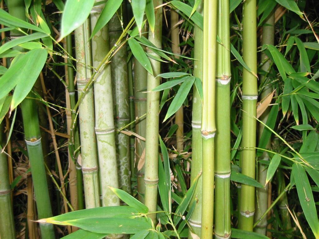 Bæredygtigt tøj af bambus